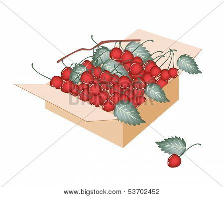Sweet Red Cherries In A Shipping Box