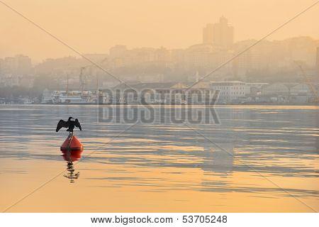 Cormorant Bird At Dawn