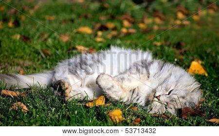 White Cat In Autumn