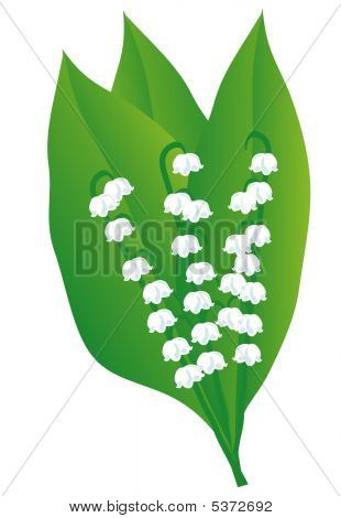 A Bouquet Of Lily Of The Valley