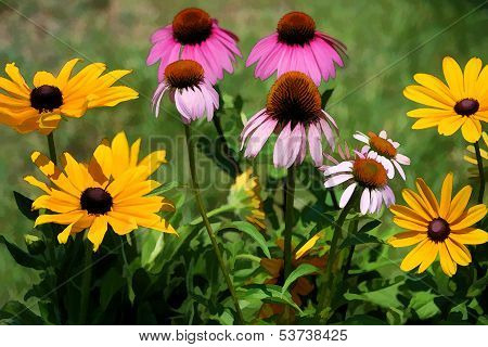 Coneflower and Black-eyed Susan Flowers