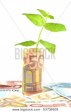green plant growing out of banknotes isolated on white