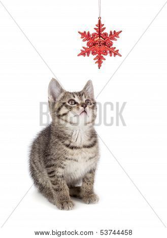 Cute Striped Kitten Playing With A Christmas Ornament On White