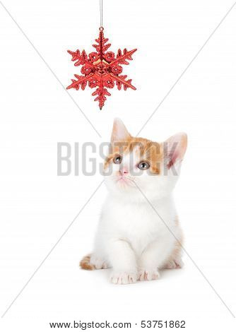 Cute Orange And White Kitten Playing With A Christmas Ornament On White