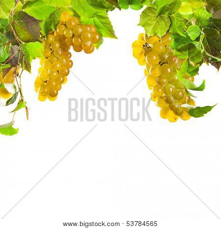 Pieces of white wine grapes on white background