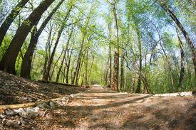 pic of birchwood  - Landscape with a solar birchwood - JPG