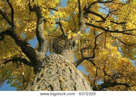 Mossy Sky-high Tree