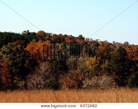 Rura l Mississippi Landscape