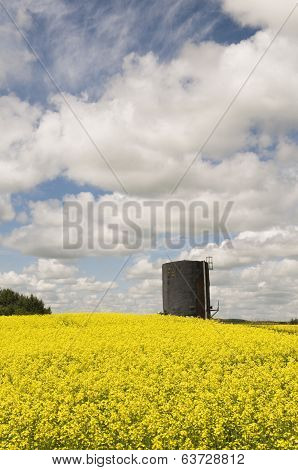 Oil Tank In Canola Field