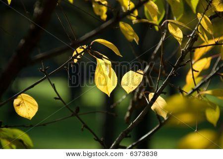 golden lives over dark background
