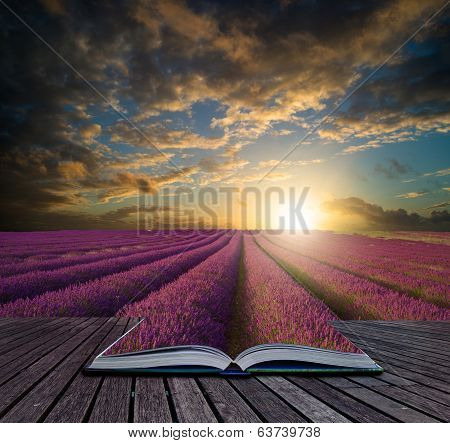 Book Concept Vibrant Summer Sunset Over Lavender Field Landscape
