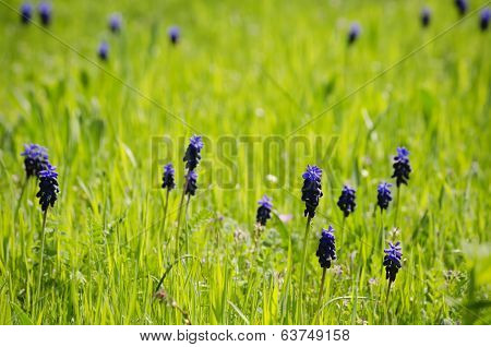Spring Flowers In Green Grass