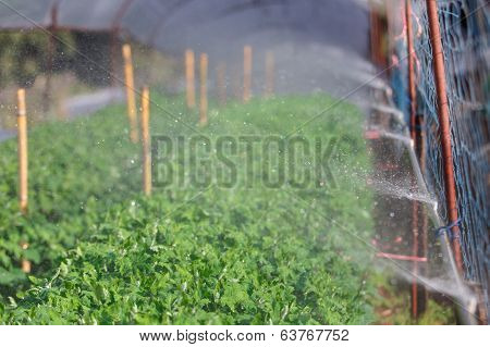 Organic Plat Being Watered
