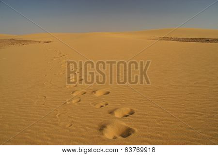 Trails In The Desert