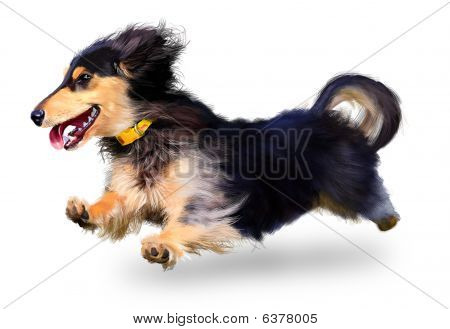 dachshund on a white background