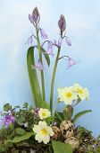 picture of hazy  - Spring flowers and birds eggs against a blue sky with hazy white cloud - JPG