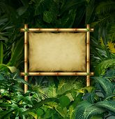 picture of vegetation  - Jungle sign blank billboard concept as a bamboo banner in a tropical plant forest full of green vegetation as a symbol of nature communication or environmental advertising - JPG