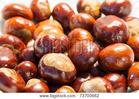 Chestnut Close Up Shoot
