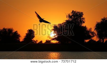 Bird Silhouette On Sunset Background