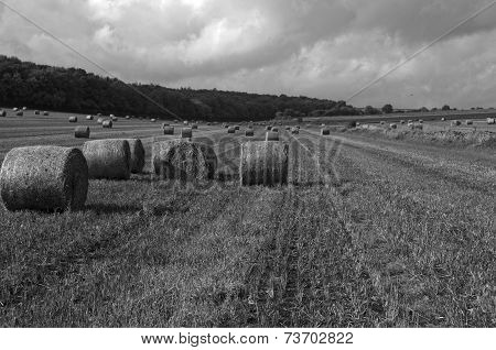 Black and white field with hay bails