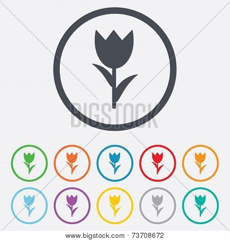 Flower sign icon. Rose symbol.