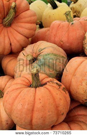 Big orange pumpkins at market