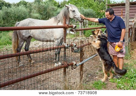 Horse Dog And Man