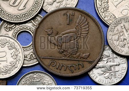 Coins of Ireland. Hen with chickens depicted in the old Irish one penny coin (1946).