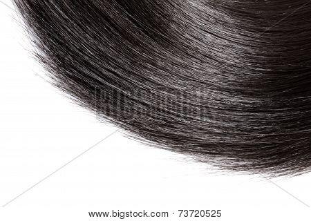 Closeup Black Hair On White Background.