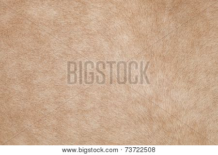 Close Up Of Horse Hair,fur, Skin, Leather Use As Animals And Natural Background ,backdrop