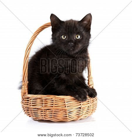 Black Kitten In A Wattled Basket.