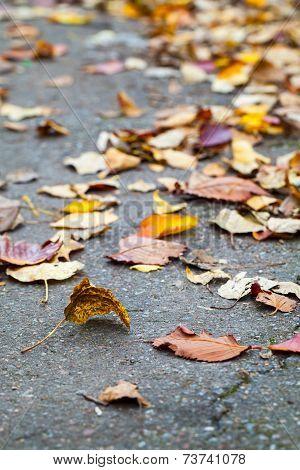Fallen Autumnal Leaves Lay On The Asphalt Road