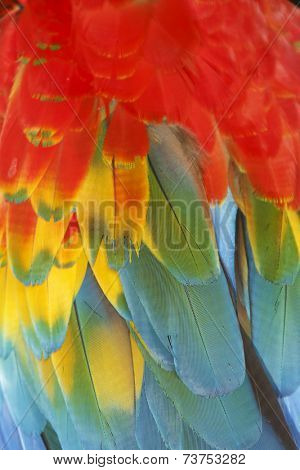 Macaw feathers background