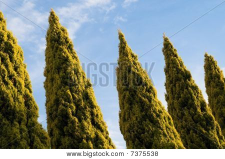 Row Of Tree Tops Set Against A Blue Sky