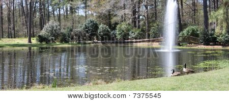 Pond at the gardens