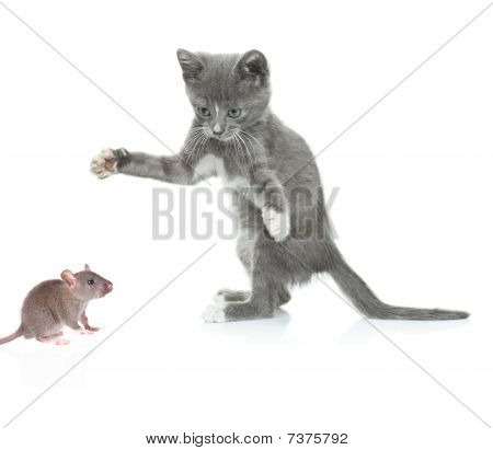 Cat catching a mouse