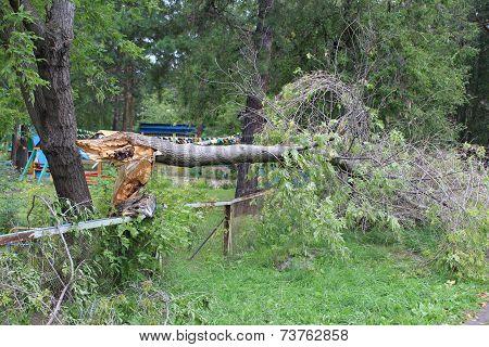 Broken tree after Hurricane