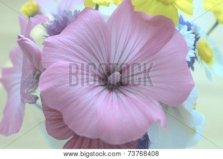 Pinkish flower