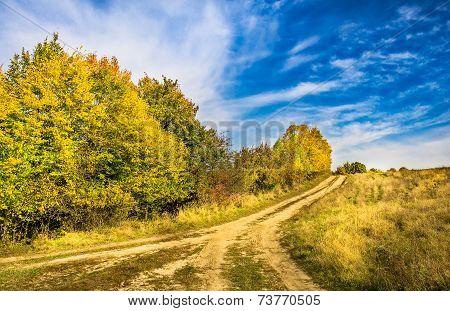 Vivid Autumn Landscape.