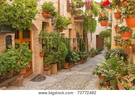 Flower Street In The Town Of Spello (umbria, Italy)