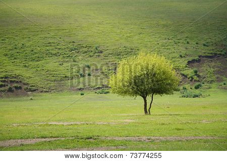 Isolated Tree