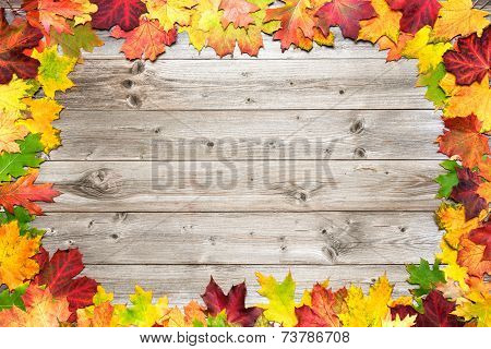 Autumn Background With Colored Leaves