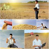 stock photo of soybeans  - Collection of soybean field and harvesting images - JPG