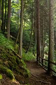 foto of sequoia-trees  - wide trail with a wooden fence near the lawn in the shade of pine trees of green forest - JPG