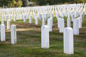 pic of arlington cemetery  - arlington cemetery graveyard white tombstones - JPG