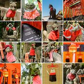 image of inari  - Collection of Fushimi Inari Taisha Shrine scenics - JPG