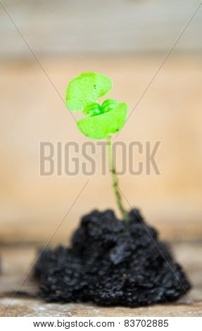 Green sprout growing from seed. Spring symbol, concept of new life