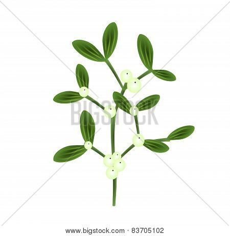 Twig Of Mistletoe