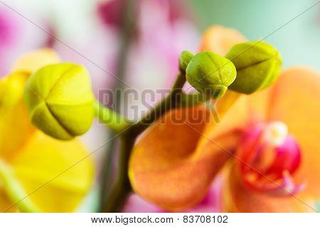 Close-up Of Orange Orchid Bud