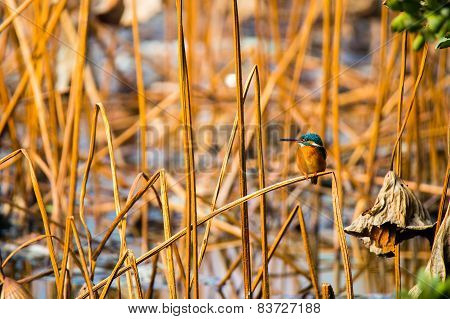 A bird sitting among yellow reed marshes
